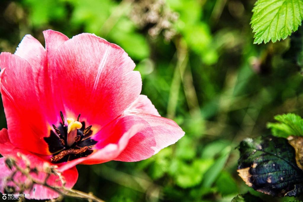 photo-nature-fleur